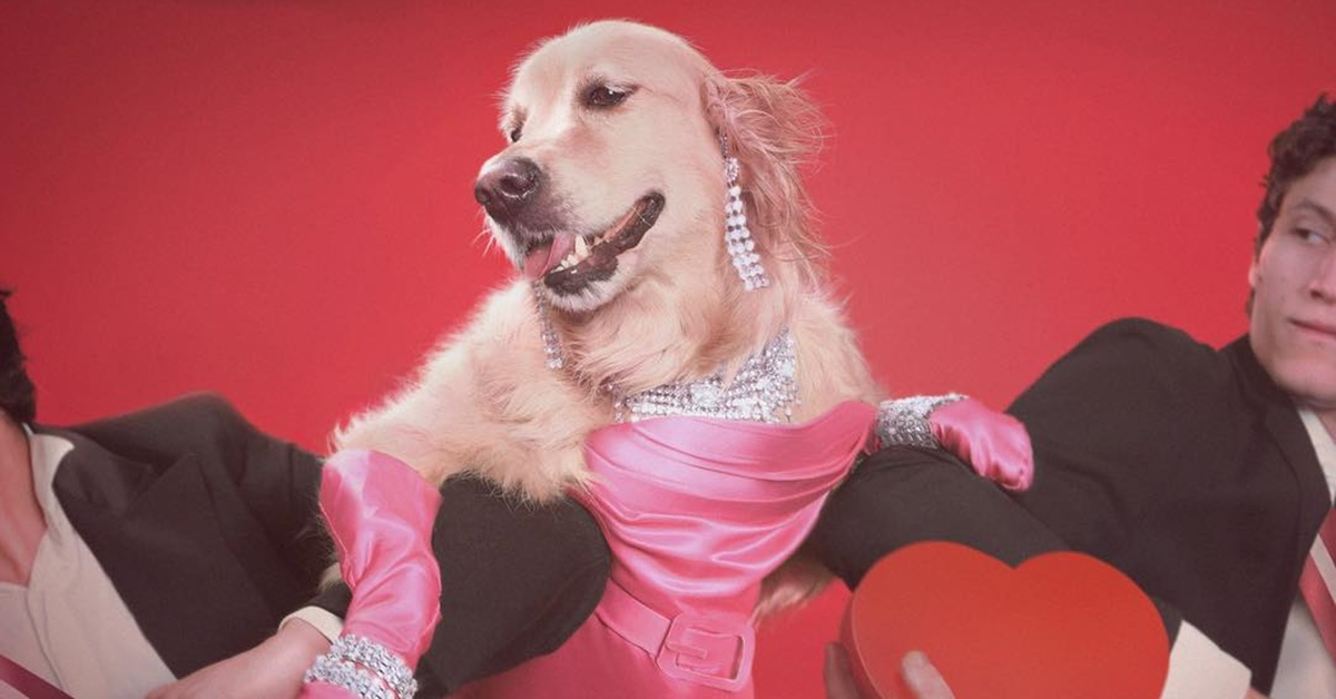 Cãozinho do Instagram faz sucesso copiando looks de Madonna
