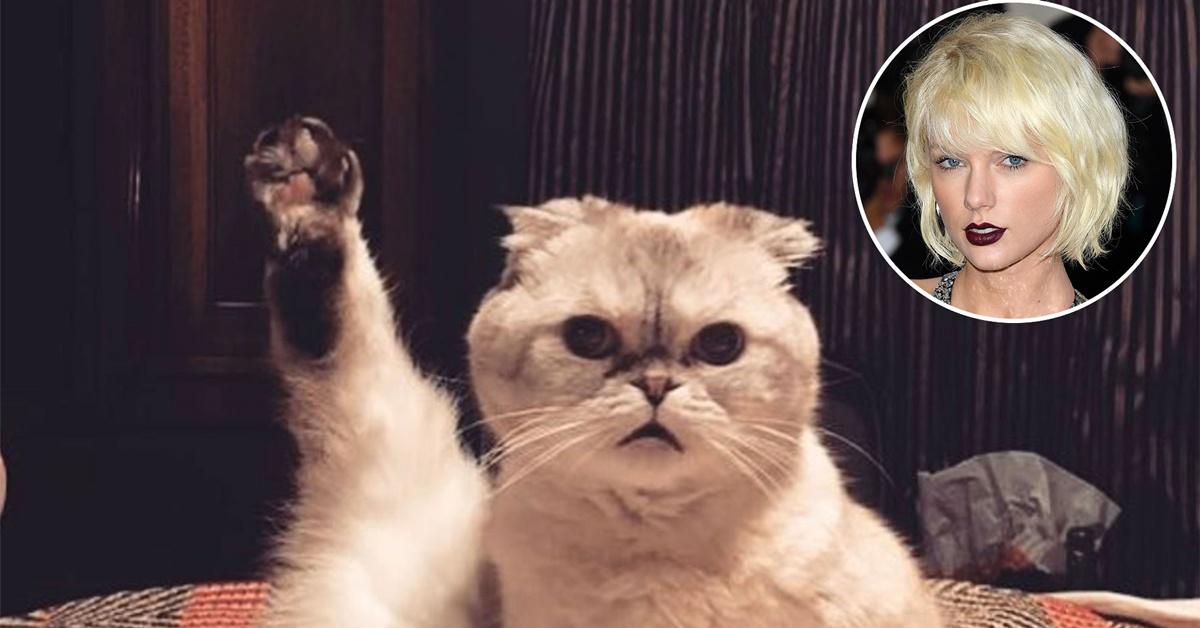 Gata de Taylor Swift é o 3º animal mais rico do mundo; saiba quanto vale sua fortuna
